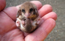 handful-of-cuteness-26